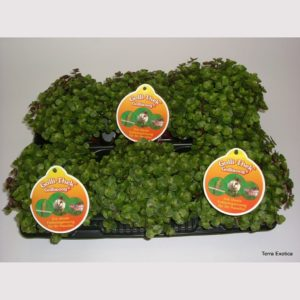 schildkrötengehege futterpflanze