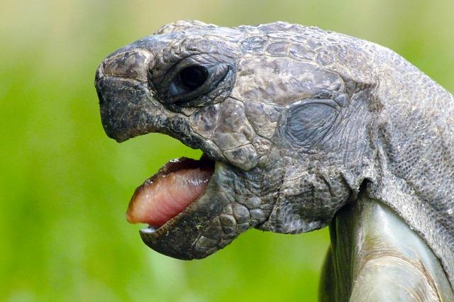 schildkrötengehege offener mund