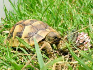 schildkrötengehege mini